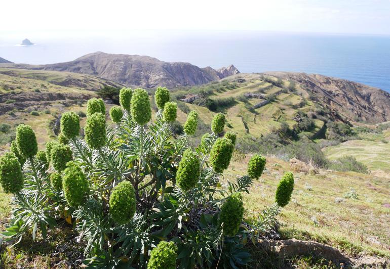 Madeira Surfen: Die Landschaft der Insel von einem Berg aus.