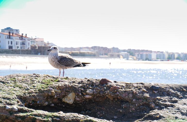 Eine Möwe sitzt auf Felsen, dahinter erblickt man Meer, Strand und Häuser entlang des Strandes.