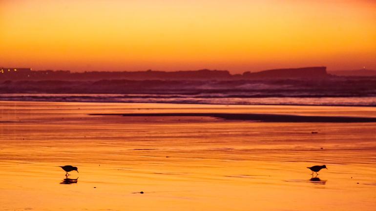 In einen Sonnenuntergang getauchter Strand mit Vögeln im Wasser in Peniche, Portugal.