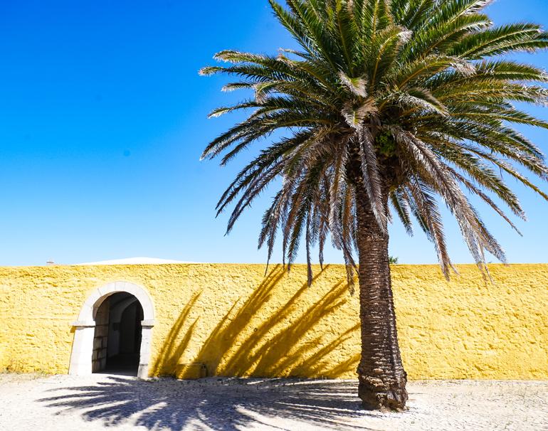 Einer Palme steht vor den gelben Mauern eines Forts, strahlend blauer Himmel.