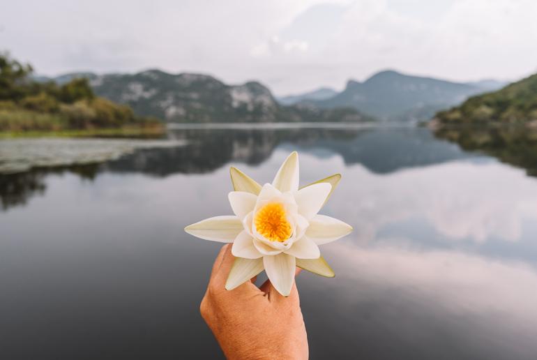 Reisetipps, Geheimtipps, Strand: Eine Seerose die vor einem See in der Hand gehalten wird.