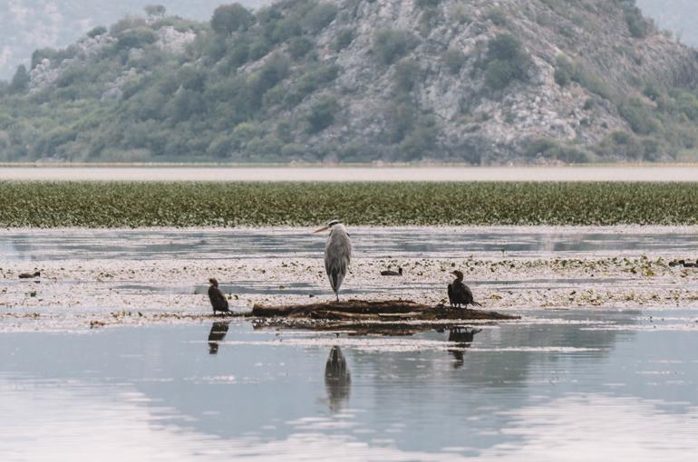 Reisetipps, Geheimtipps, Strand: Zugvögel sitzen auf einem Baumstumpf.