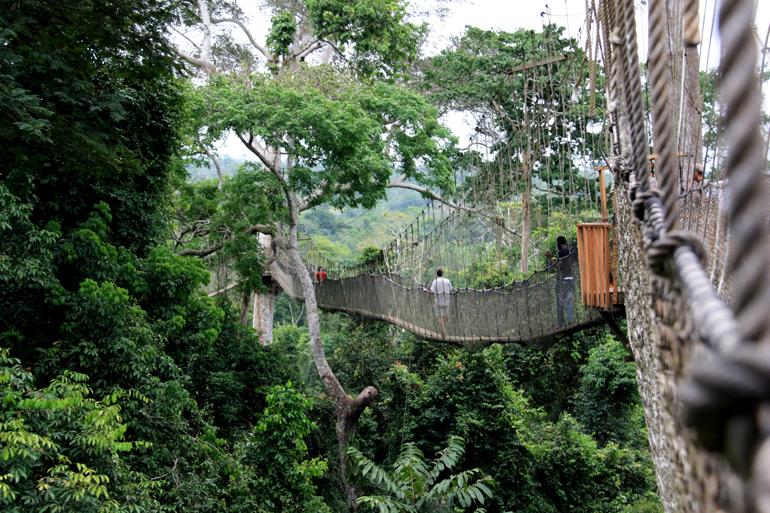 Seilbrücke des Canopy Walk im Kakum Nationalpark in Ghana
