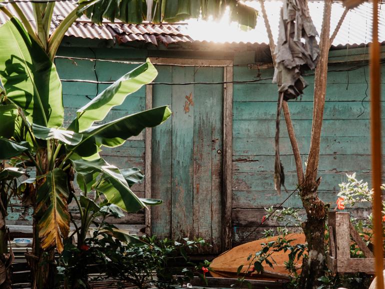 Bananenbäume in einem kleinem Hinterhof.