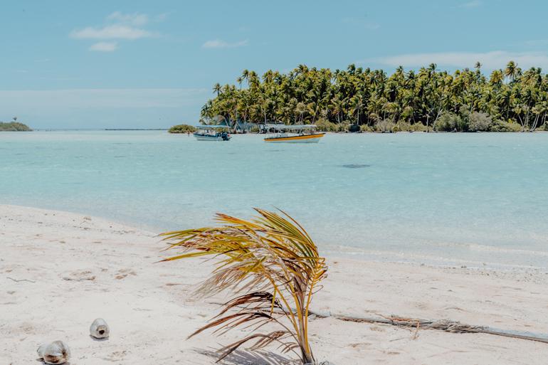Eine Palme am Strand, mit einer Insel im Hintergrund.