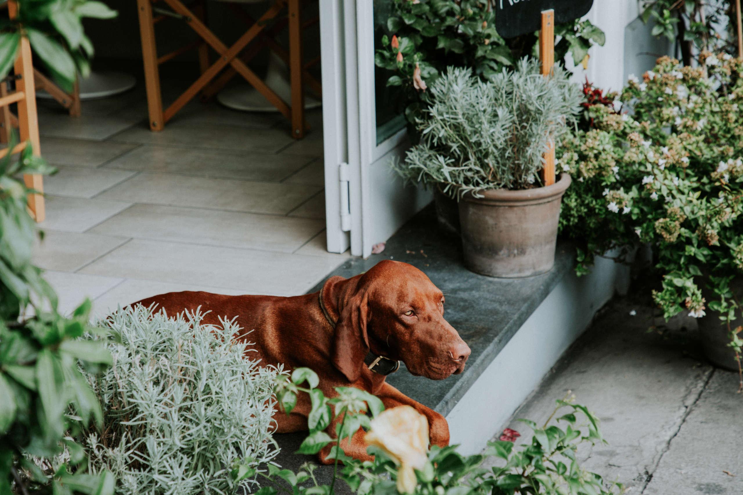 Ein Hund der auf einer Terrasse liegt.