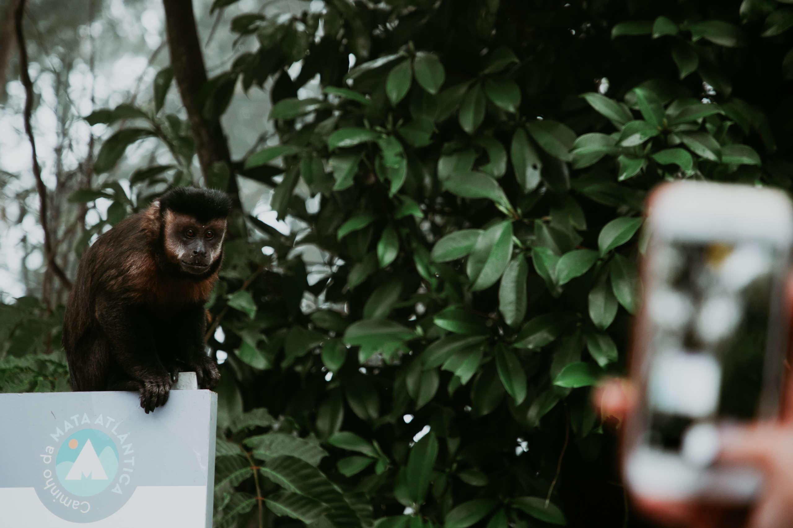 Ein Affe der auf einem Schild sitzt.