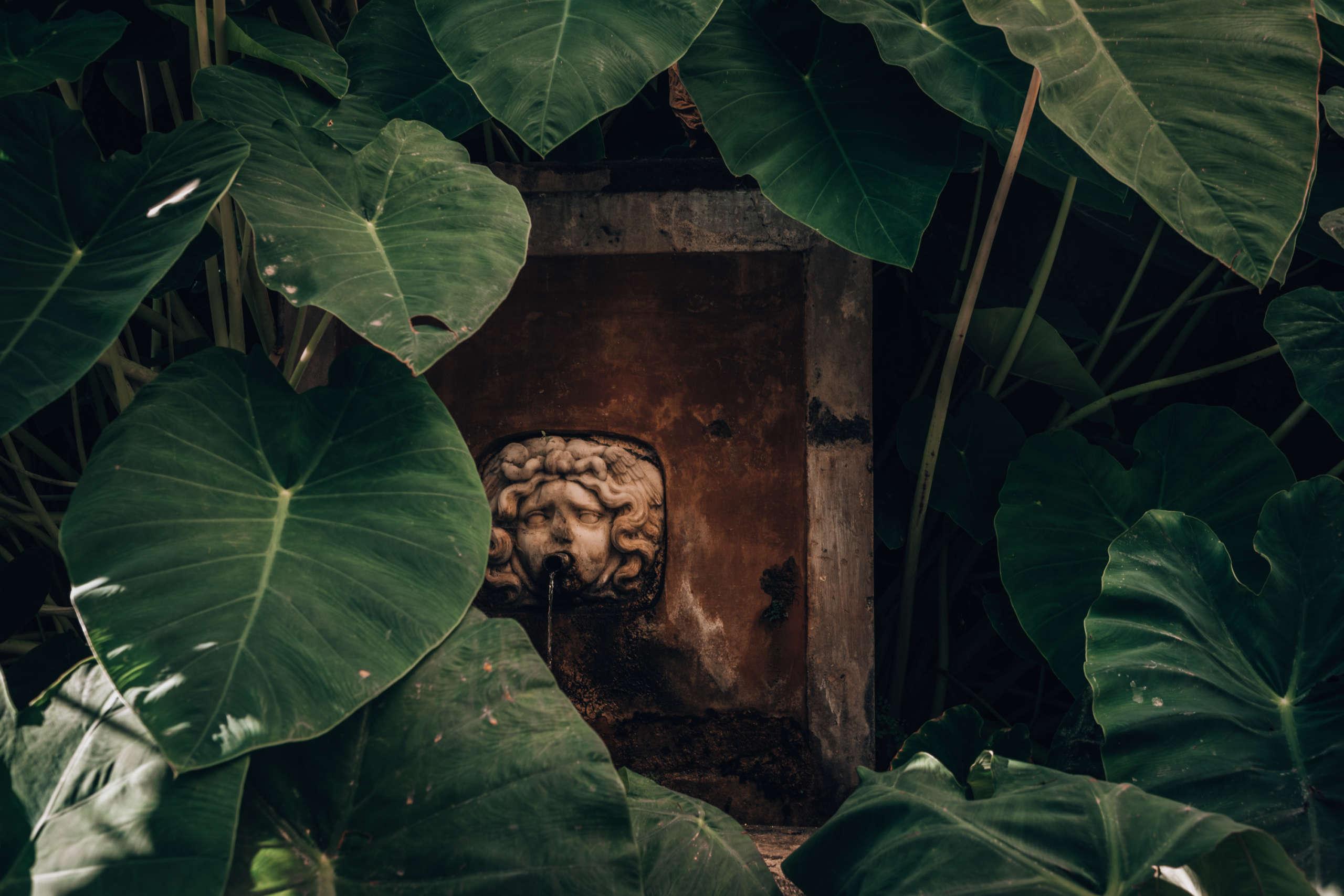 Ein Brunnen der von Blättern umgeben ist.
