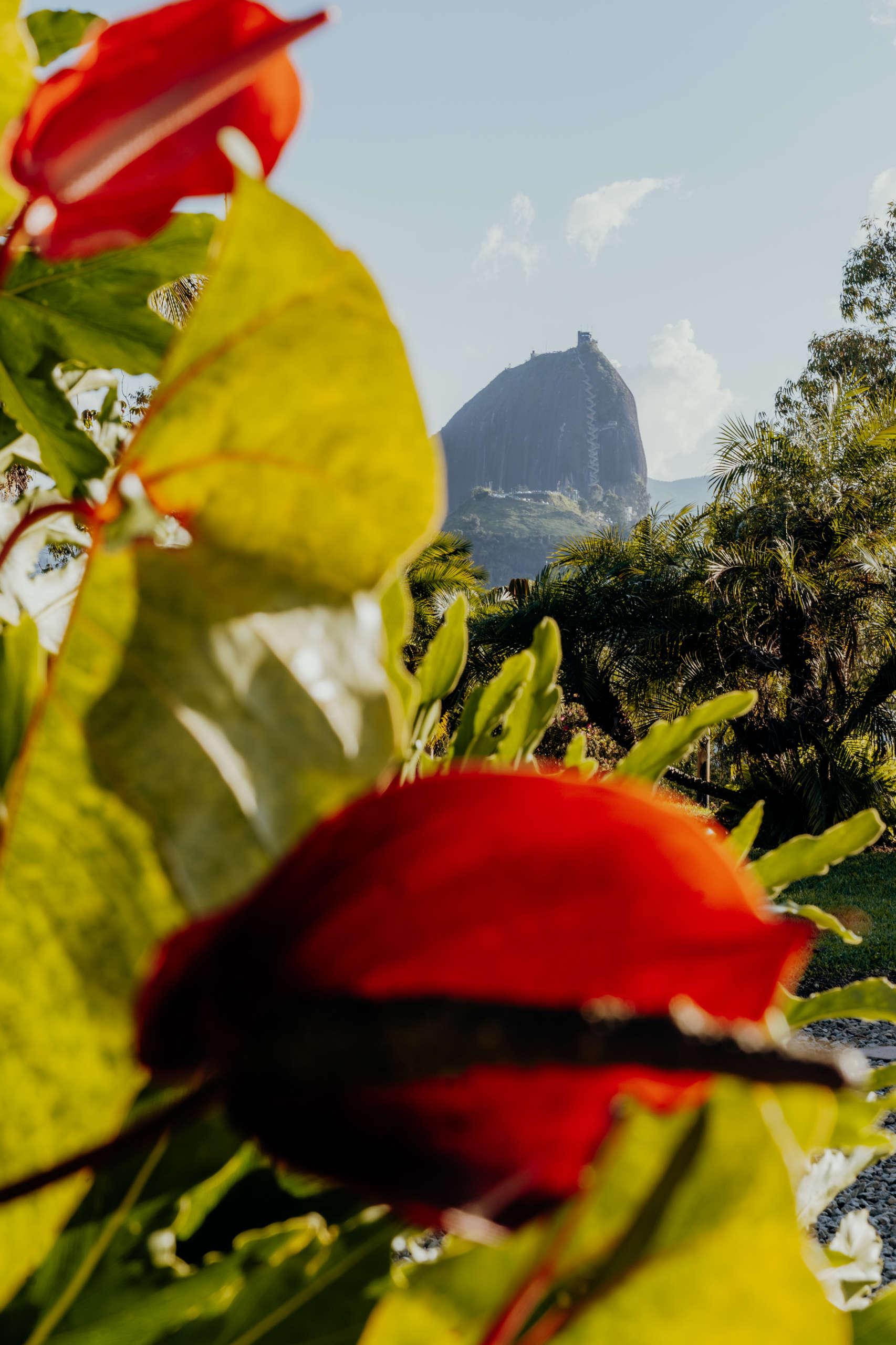 Eine rote Blume mit einem Berg im Hintergrund.