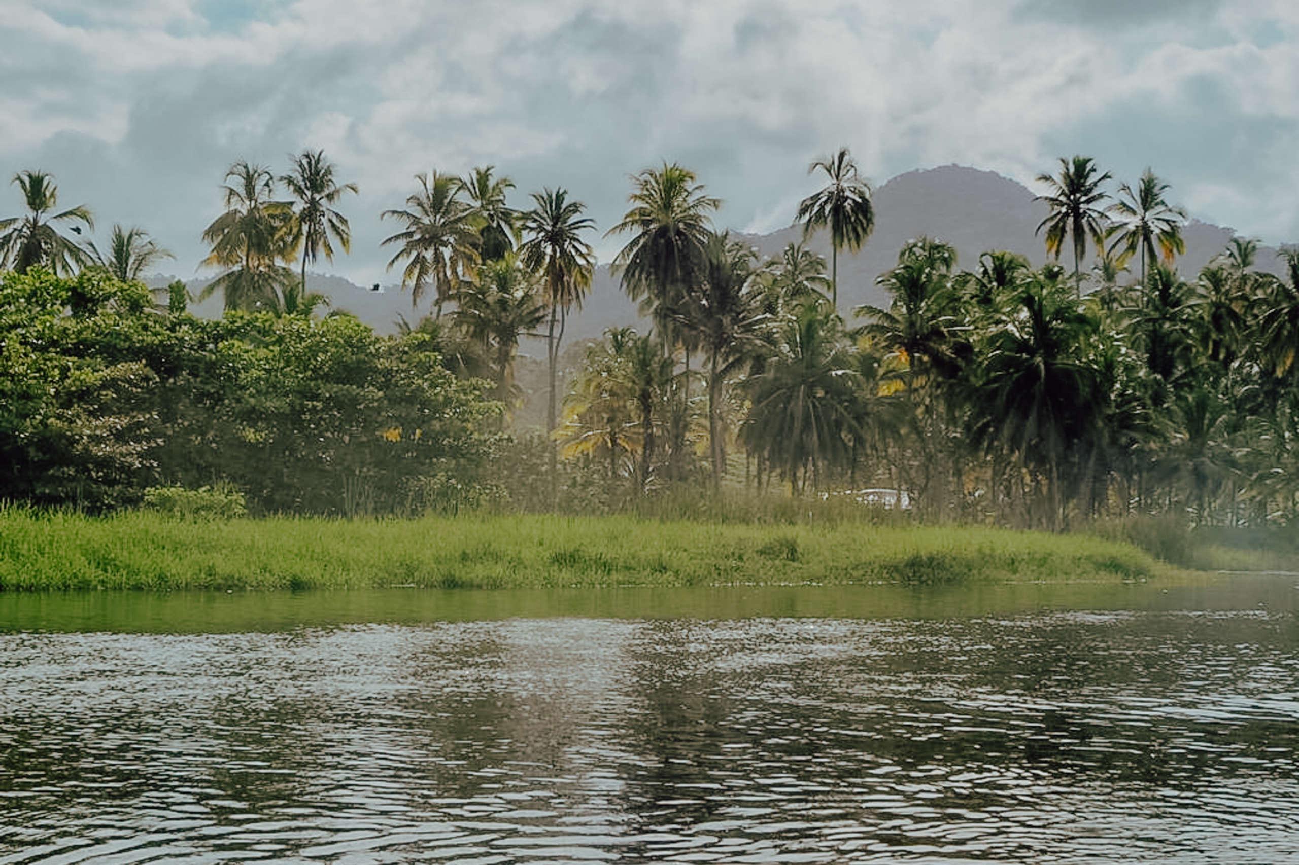 Palmen die nah am Wasser stehen.