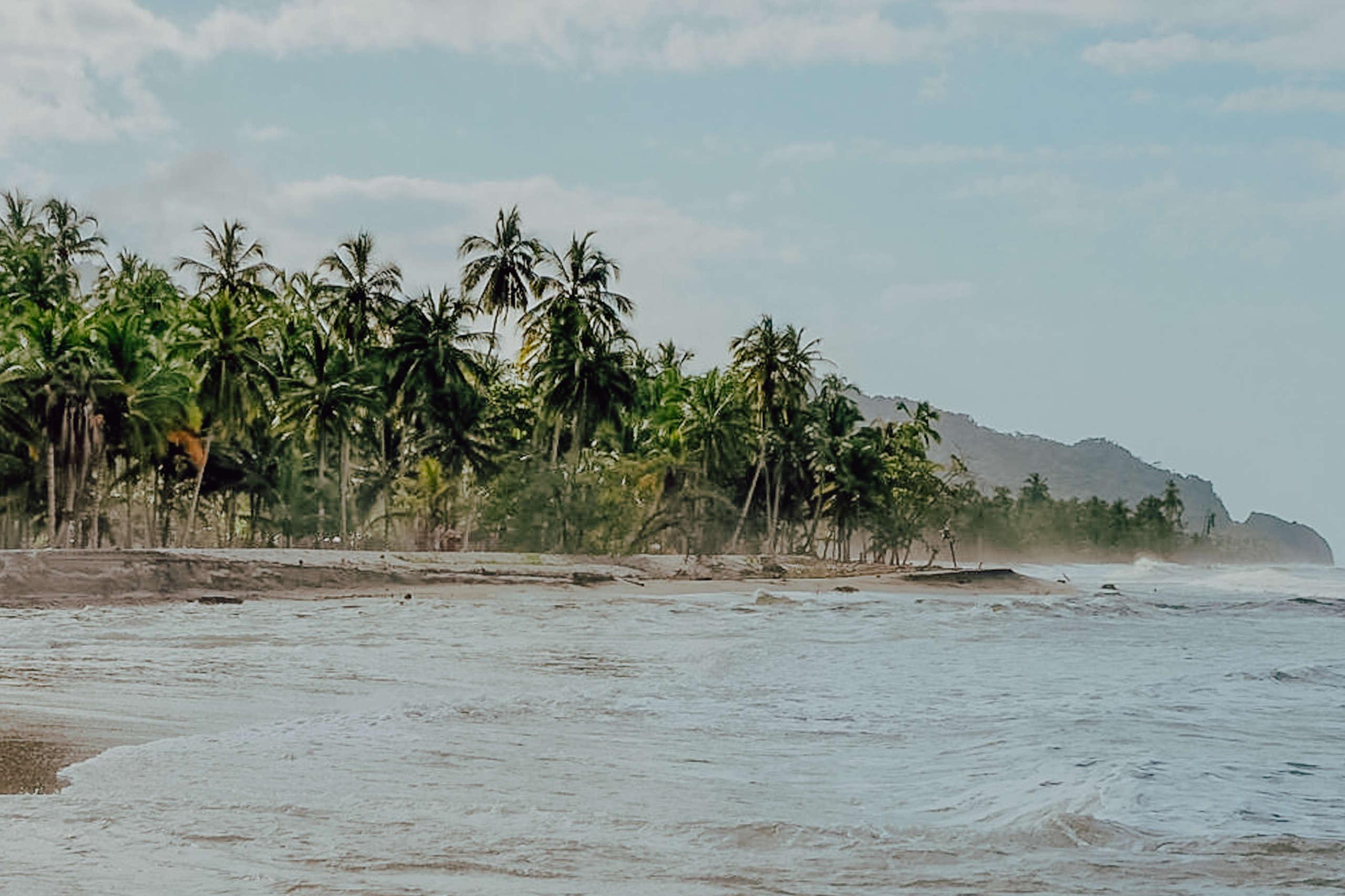 Palmen die an einem Strand stehen.