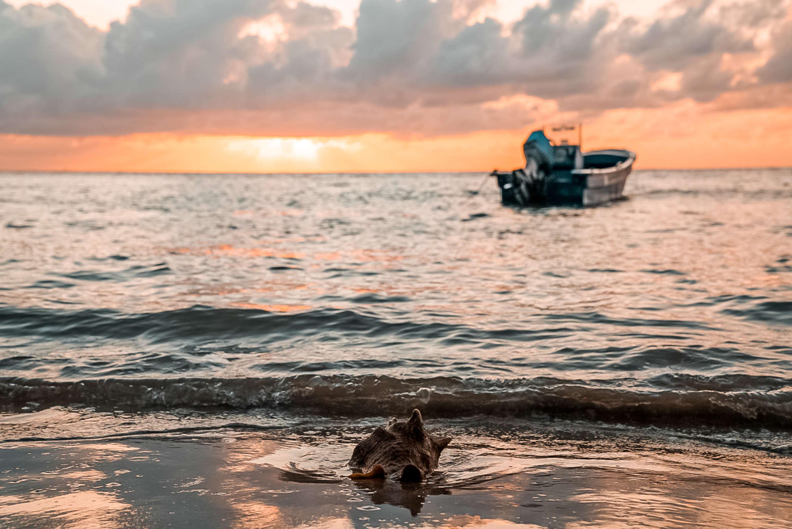 Ein Boot das im Meer liegt und eine große Muschel die am Strand lieg wärend dem Sonnenuntergang.