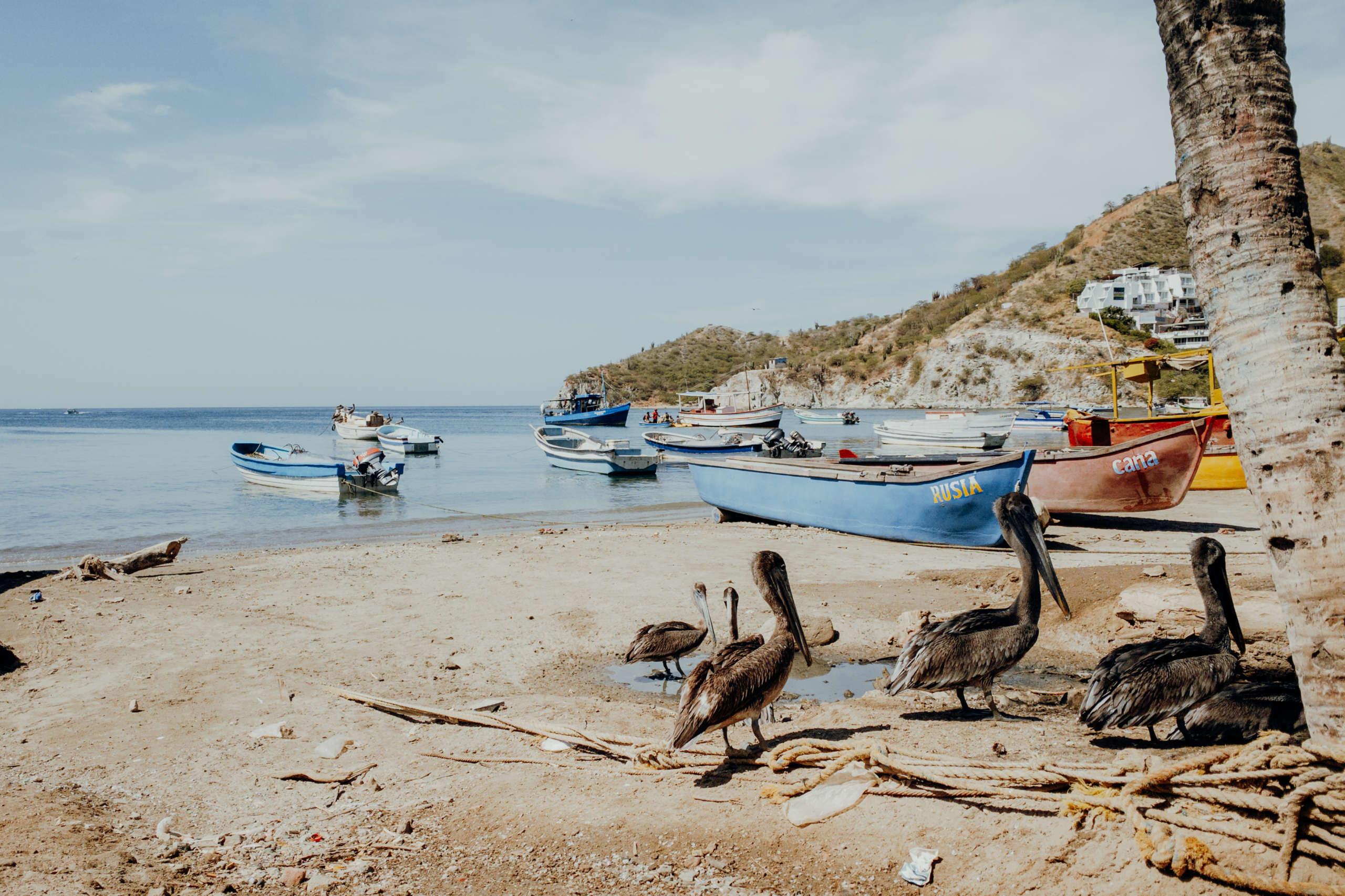 Pelikane die am Strand entlang laufen.