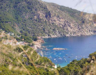 Blick durch Gestrüpp auf die Küste und das Meer der Costa Brava