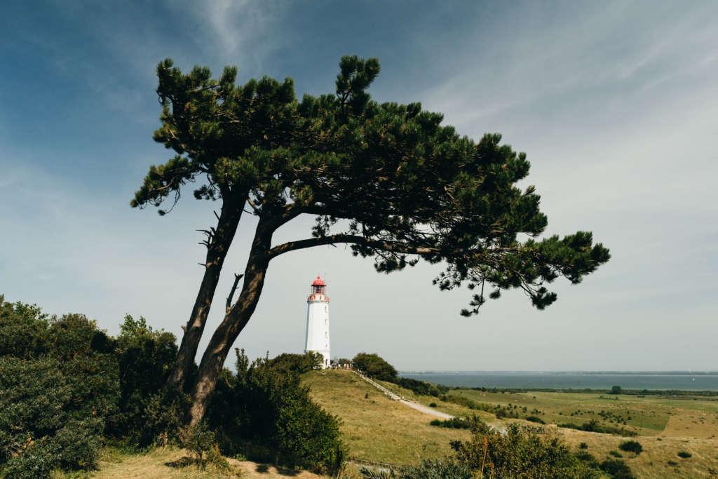 Auf der Ostseeinsel Hiddensee befindet sich außer einem Leuchtturm und viel Grün nicht viel.