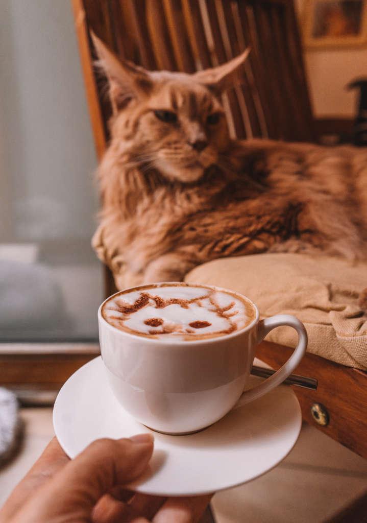 Eine Tasse Cappucino und eine Katze im Katzencafé Wien