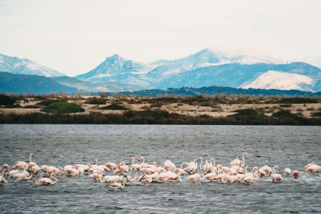 Auf dem Meer bewegt sich ein ganzer Schwarm von hellrosa Flamingos, hinter ihnen bietet sich ein blaues Bergpanorama, das hinter den Wolken verschwindet
