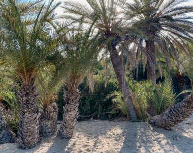 Geheimtipp an der Ostküste der griechischen Insel Kreta: Der von Palmen gesäumte Sandstrand Vai.
