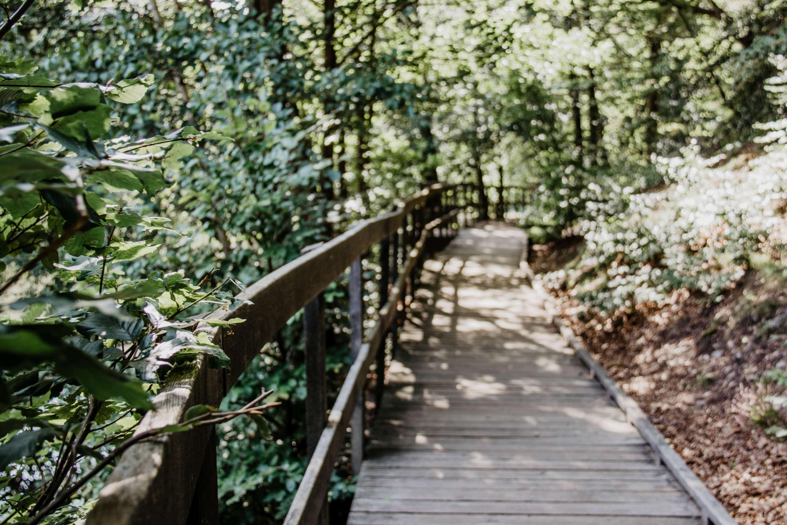 Ein Steg aus Holz führt mit einem Zaun durch eine grüne Landschaft aus Bäumen und Gewächsen.