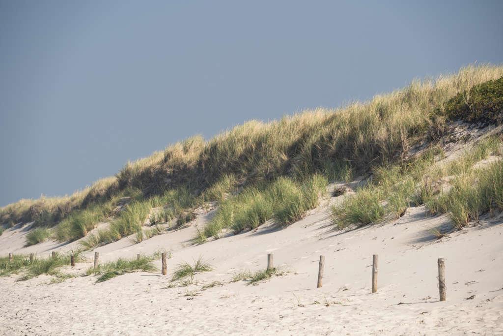 Eine Düne am Weststrand in Darß mit weißem Sand und Gräsern bewachsen liegt unter blauem Himmel.
