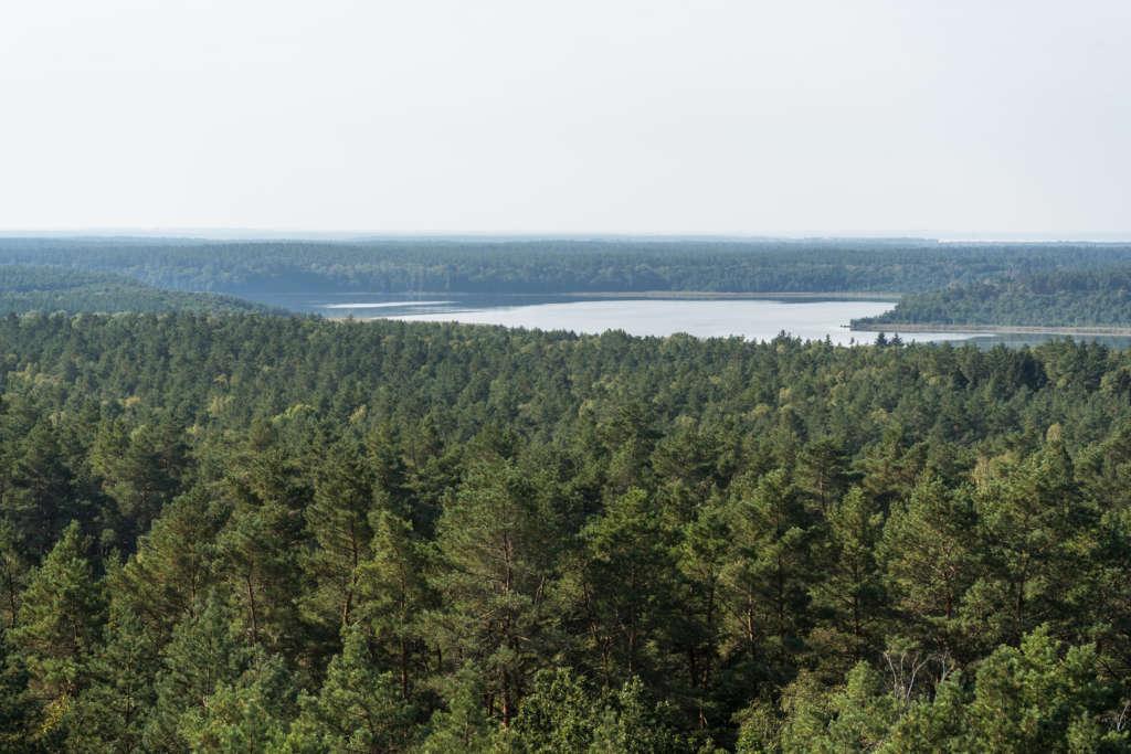 Über Wälder und Seen blickt man hinweg auf den Nationalpark Mecklenburgische Seenplatte.