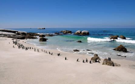 Pinguine in ihrer natürlichen Umgebung am Strand zu erleben, ist ein Highlight auf jeder Reise durch Südafrika.