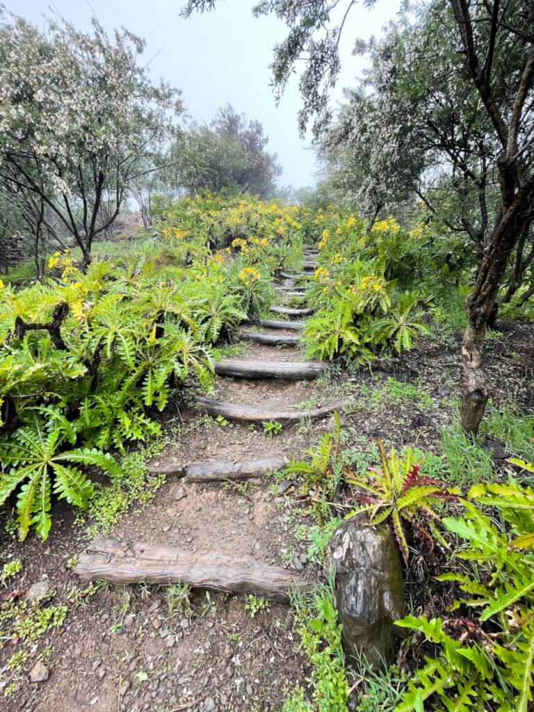 Ein für Anfänger geeigneter Wanderweg auf La Gomera führt durch aufregende Gräser und Natur pur.
