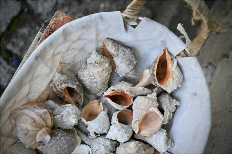 Ein Korb voller Muscheln am Strand von Sosopol in Bulgarien.
